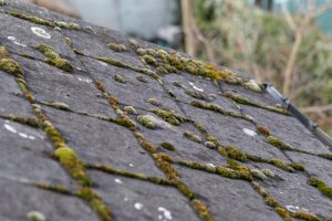 roof shingle maintenance tip | Check for mold and algae growth | TruHome Inc providing remodeling, roofing, windows, concrete floors, and siding services in Monroe, WI and Tristate area
